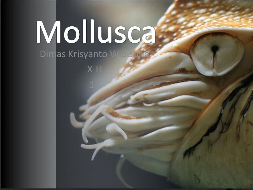 Download Persentasi Mengenai Mollusca