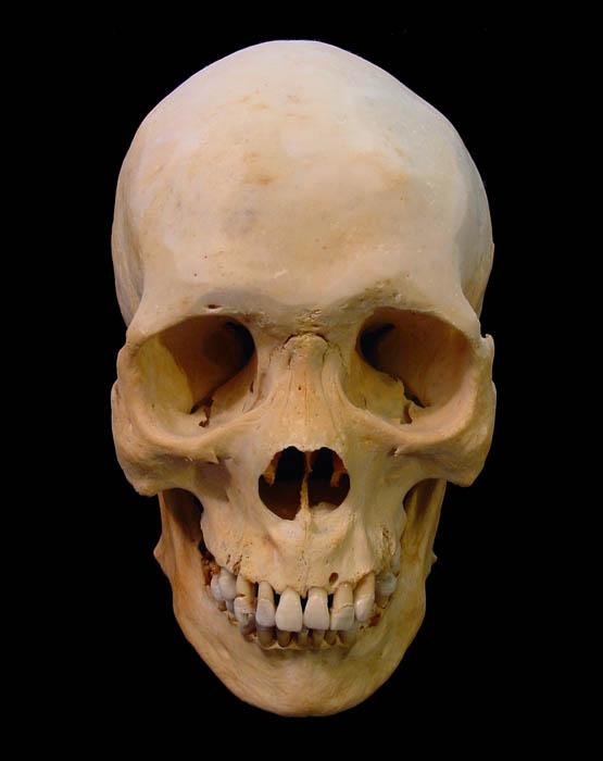 84 best images about skull on pinterest | black backgrounds, the, Skeleton