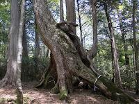 根上がりの木