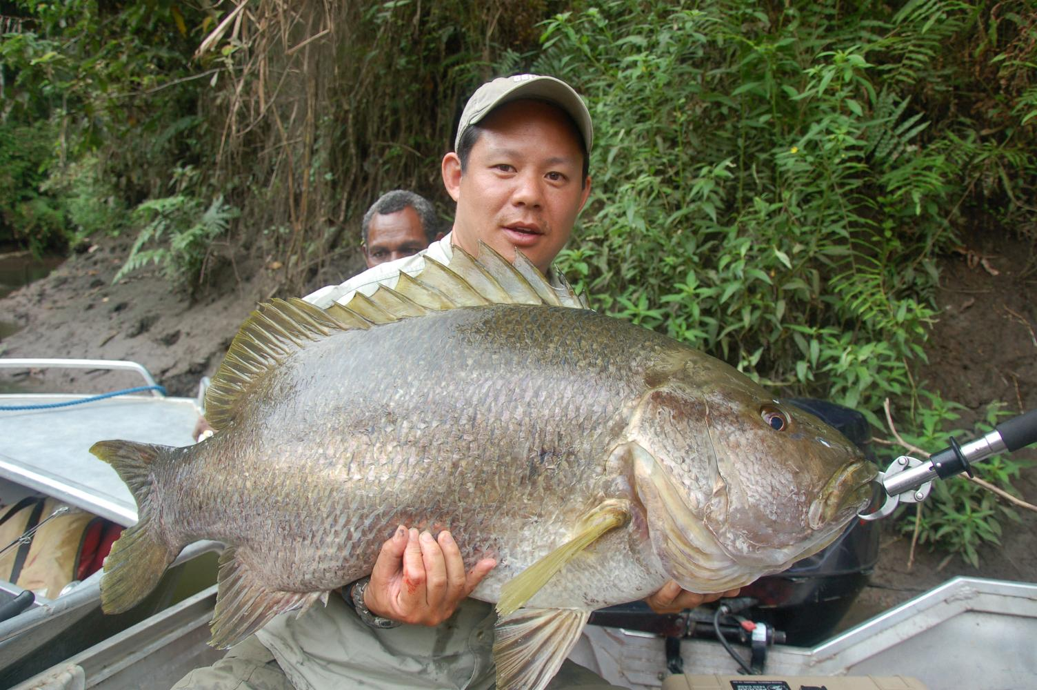 big fishes of the world snapper papuan black lutjanus