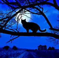 Mueeza Kucing Kesayangan Nabi Muhammad Saw Peristiwa