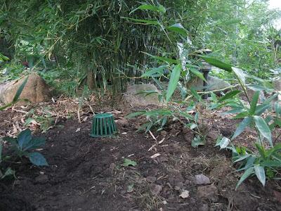 final drain backyard, gutter, roof drain pipe