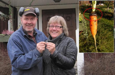 A WOMAN FOUND HER RING 16 YEARS LATER, GROWING ON A CARROT