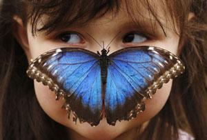 Mariposa en la nariz. Fotografía.