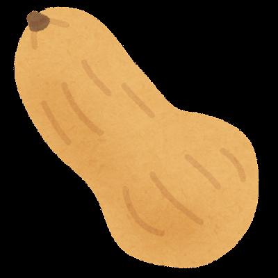 バターナット・スクウォッシュのイラスト
