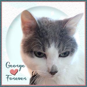 RIP GEORGE