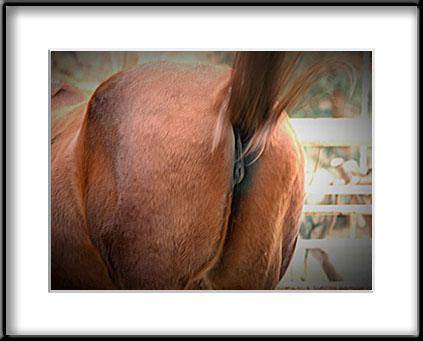 FuhrerOtaku Horse_ass