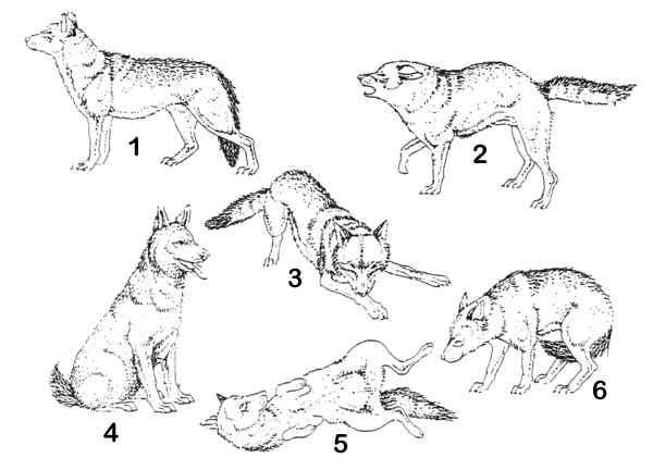 Körpersprache Des Hundes Arbeitsblatt : Hundemythen teil der wedelnde hund freut sich und