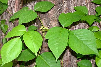 Tiempo libre el arte de ir al ba o for Planta venenosa decorativa