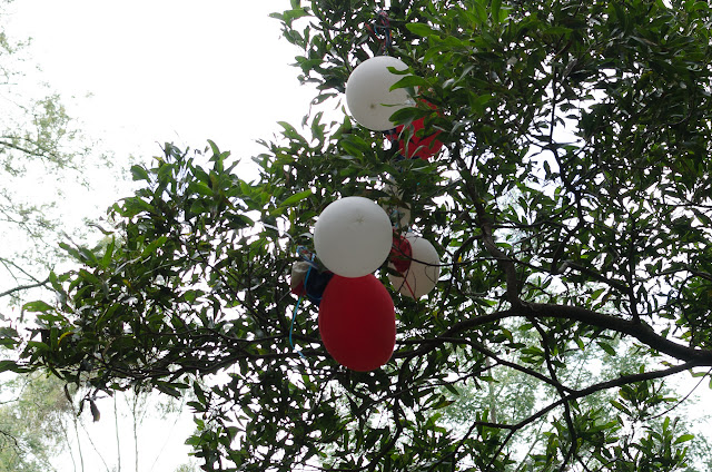 balloons in a tree