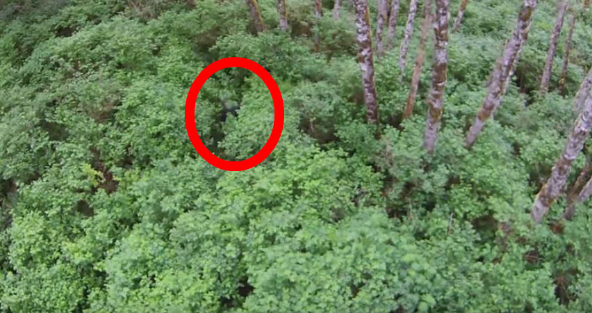 bigfoot real or not The legend of bigfoot is one that has endured for many years however, the word legend may not do the creature justice bigfoot was a pop cultural phenomenon during the 1970's and anyone who remembers tuning in to programs like.