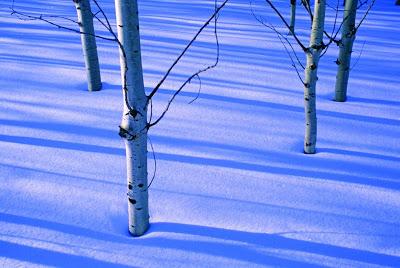 Gillette Sand Dune Visitor Center hosts 'Wildlife of Michigan in Winter' photo contest