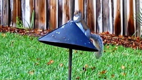 Audubon Woodlink Squirrel Baffle Long Term Test and Review