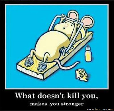 Funny Mouse  Images