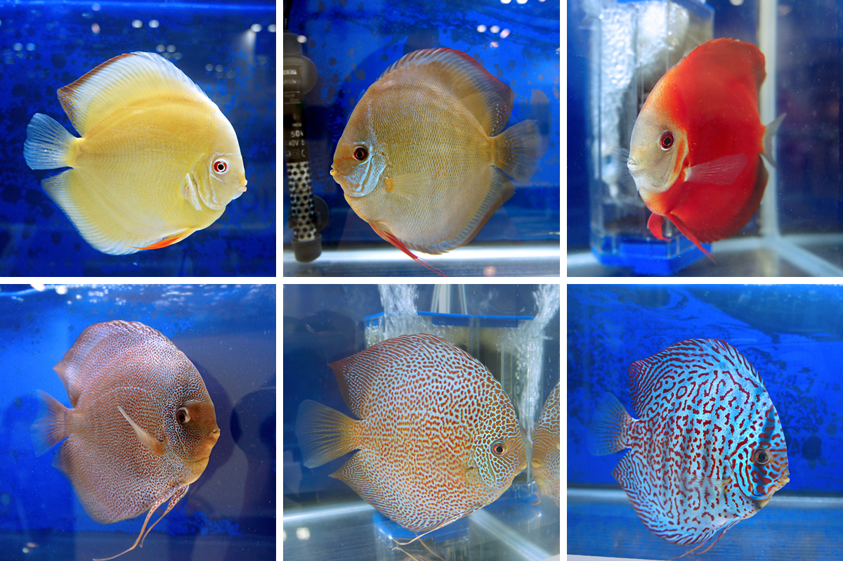 Aquarama 2013 And Pet Asia 2013