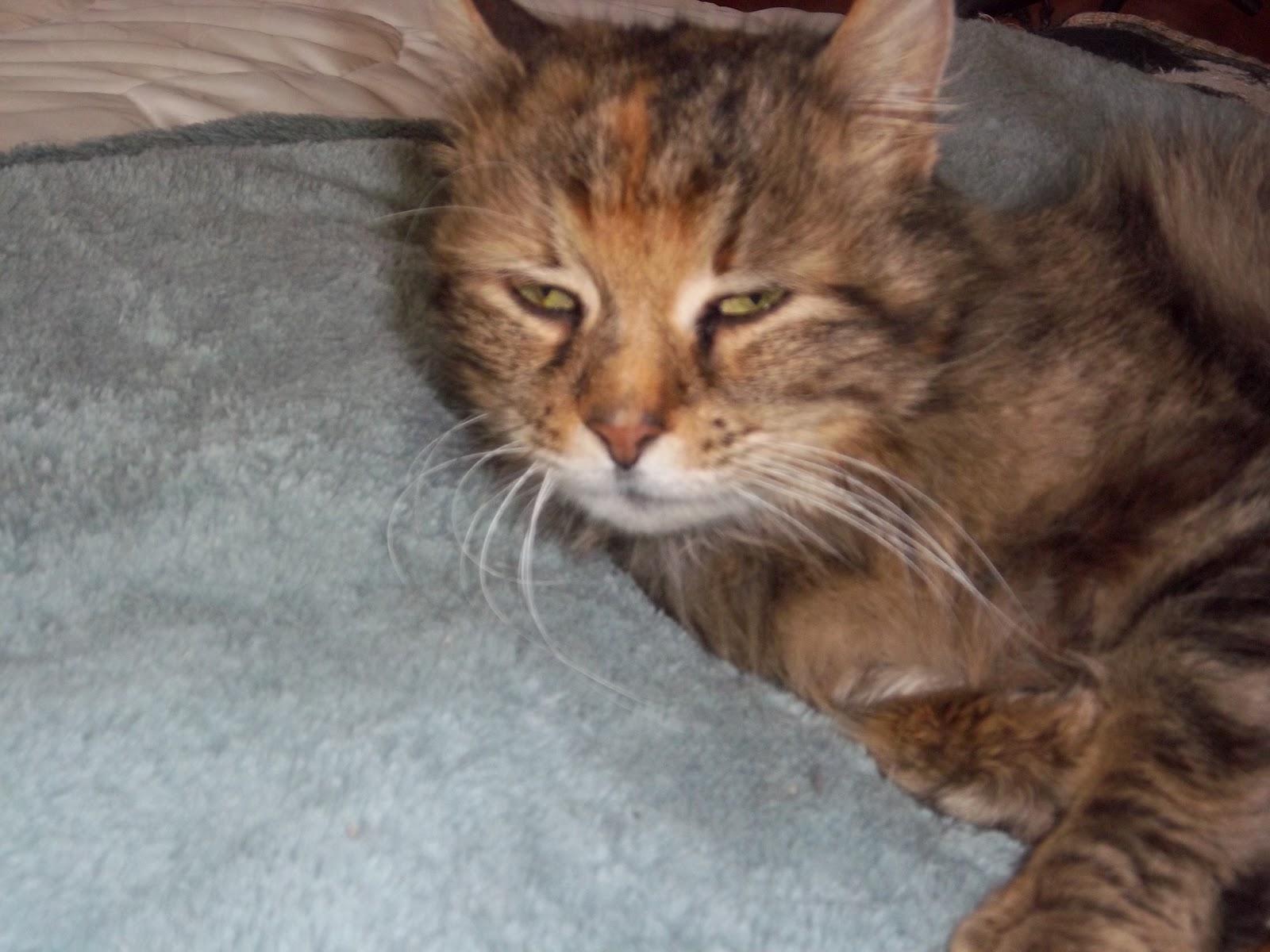 Sad Wet Kitten I get sad watching her