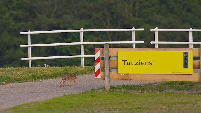 Haas zegt tot ziens - Hare says goodbye