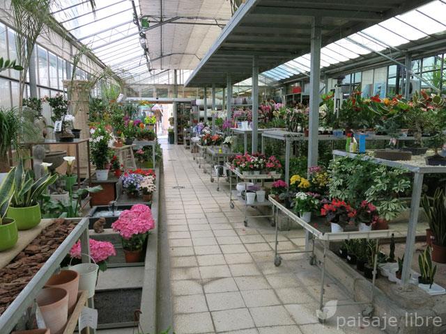 Visita al centro de jardiner a pradillo paisaje libre for Todo para viveros