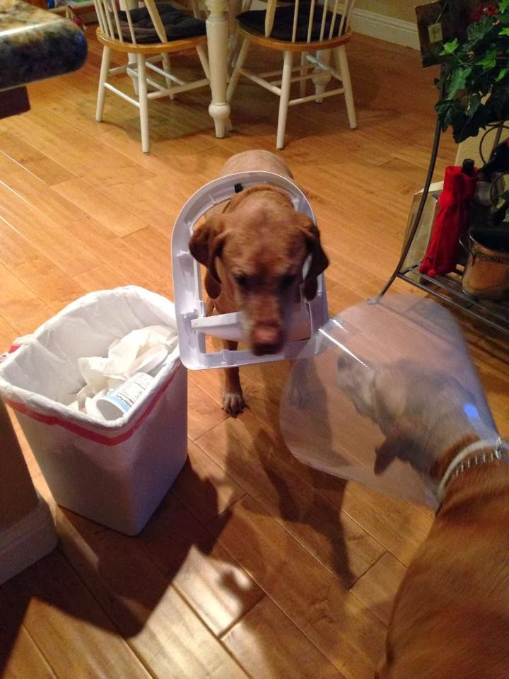 Cute dogs - part 4 (50 pics), dog pictures, dog stuck his head on garbage can lid