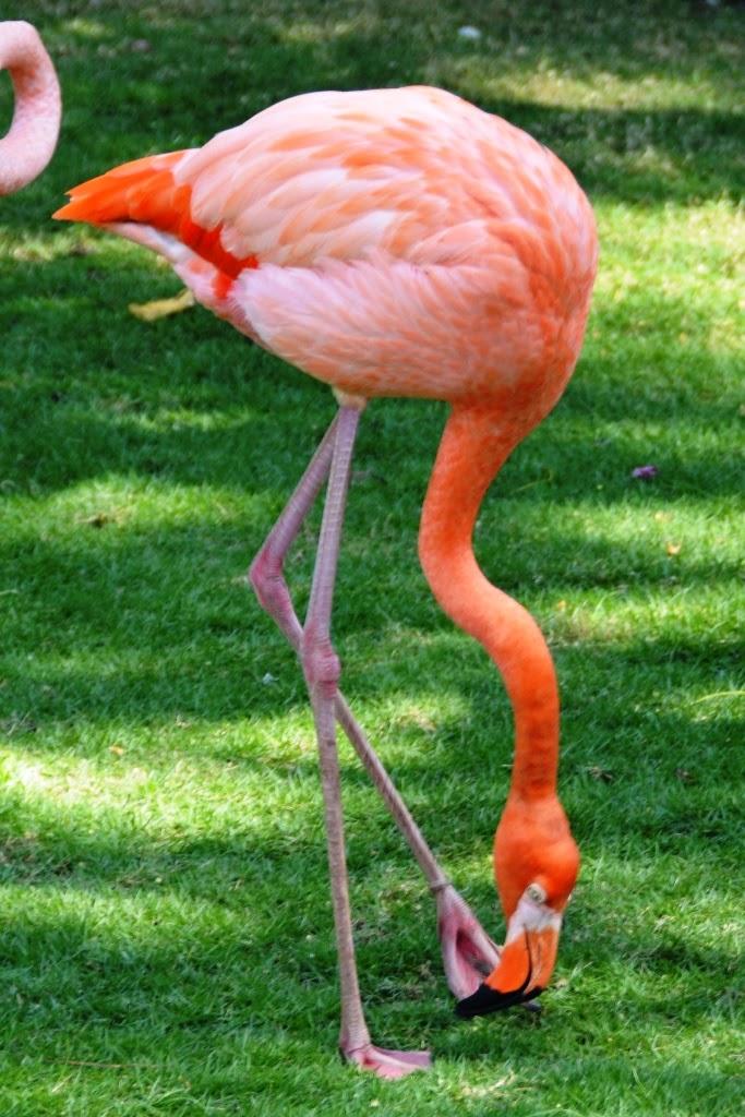 Port of Cartagena des Indes flamingo