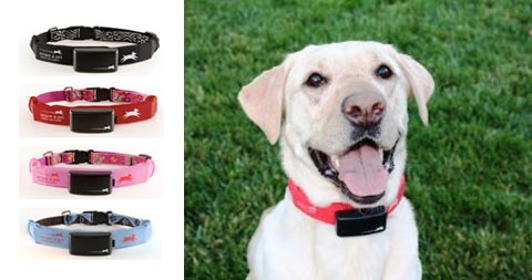 The 18 Best Pet Related Gadgets furthermore Dog Rattan Chaise Lounger further Gps Tracker For Dogs Small Gps Tracking Device Long Battery Child Gps additionally LlAz4iQ5Nso as well Saludyavancesveterinarios blogspot. on gps cat collar iphone