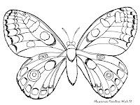Mewarnai Gambar Serangga Kupu-Kupu