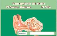 http://www.juntadeandalucia.es/averroes/~23003429/educativa/CM_oido.html