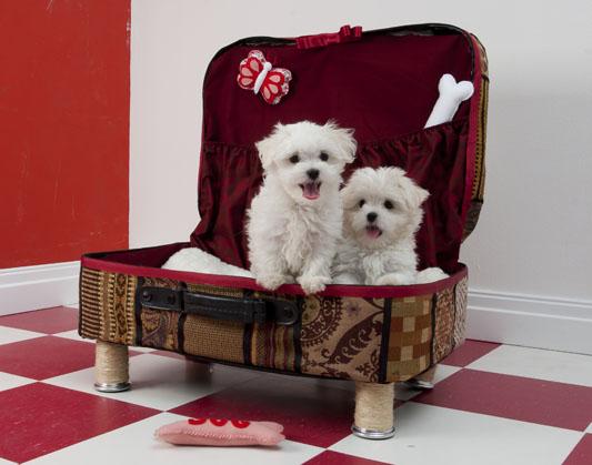 Cama para perros casero mimundomanual - Como hacer una cama para perro ...