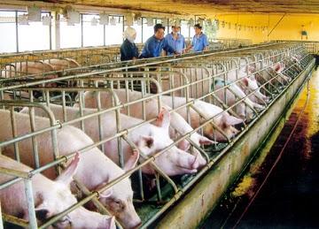 Kết quả hình ảnh cho nông nghiệp việt chăn nuôi