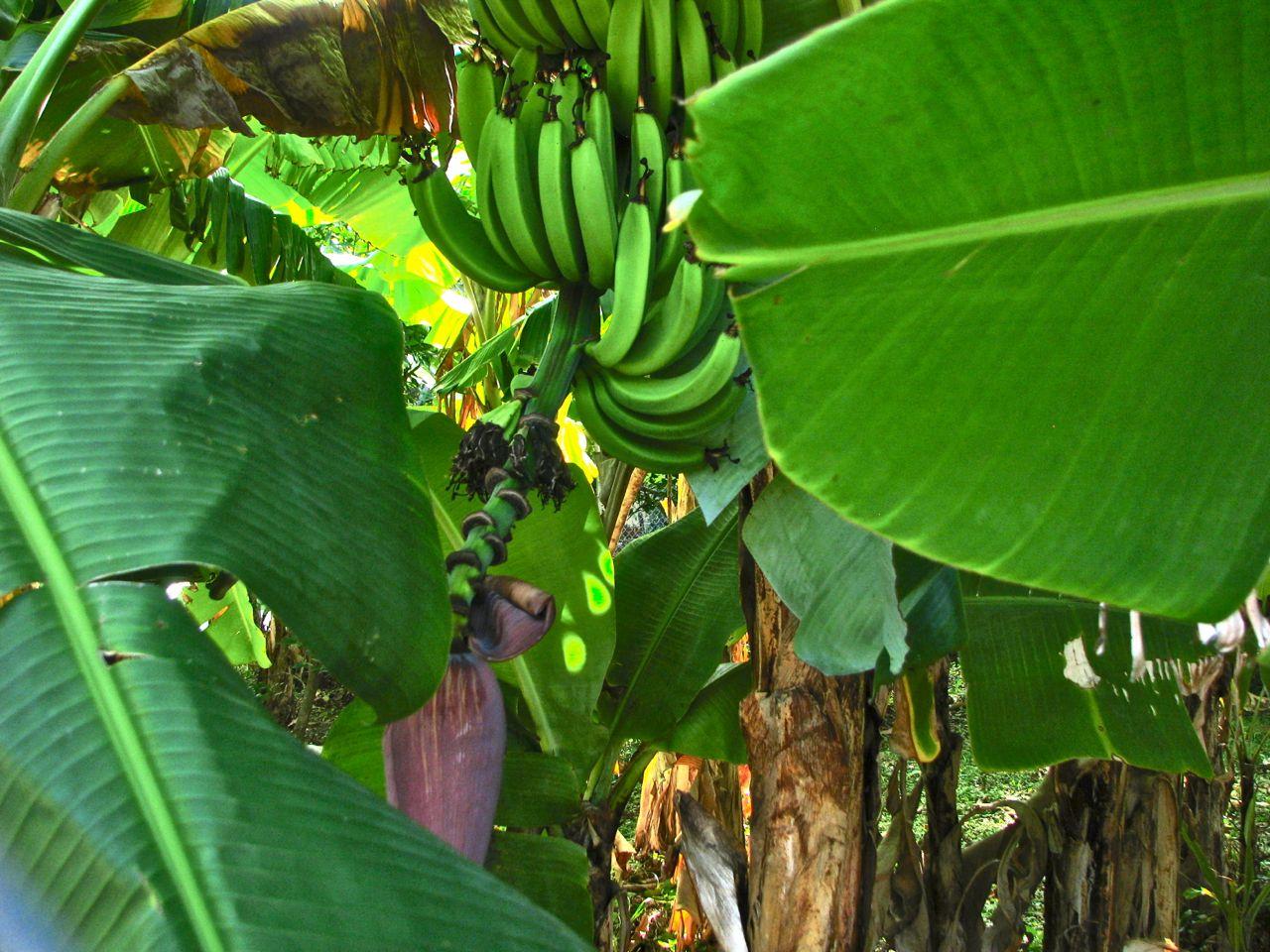 Boxhead 2 Banana