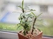 http://finfingarden.blogspot.com/2014/12/dwarf-euphorbia-cactus-cacti-nature.html