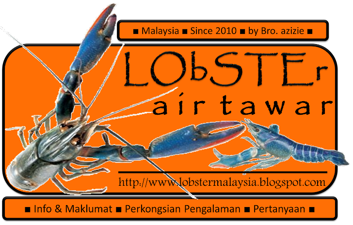 © Lobster Air Tawar Since 2010 by Bro. azizie