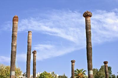 Troncos de palmera en el Parque del Retiro (Jerez)