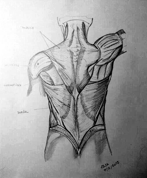 Anatomía | A mano alzada y acuarela