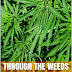 Through The weeds - Free Kindle Non-Fiction