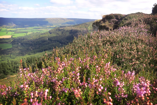 The carpet of flowing heather is a spectacular sight on the North York Moors