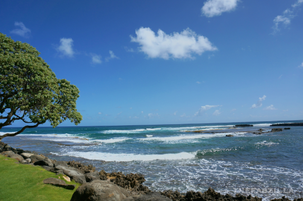 Turtle Bay Resort, where to stay in oahu, north shore, honu, what is honu, things to do in hawaii, things to do in oahu, things to do in north shore, where is turtle bay