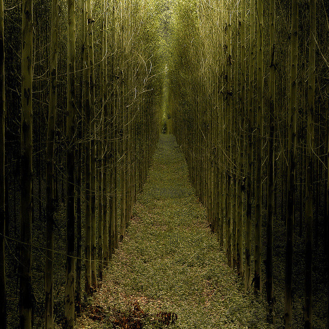 Great Nature Photographs Seen On www.coolpicturegallery.us