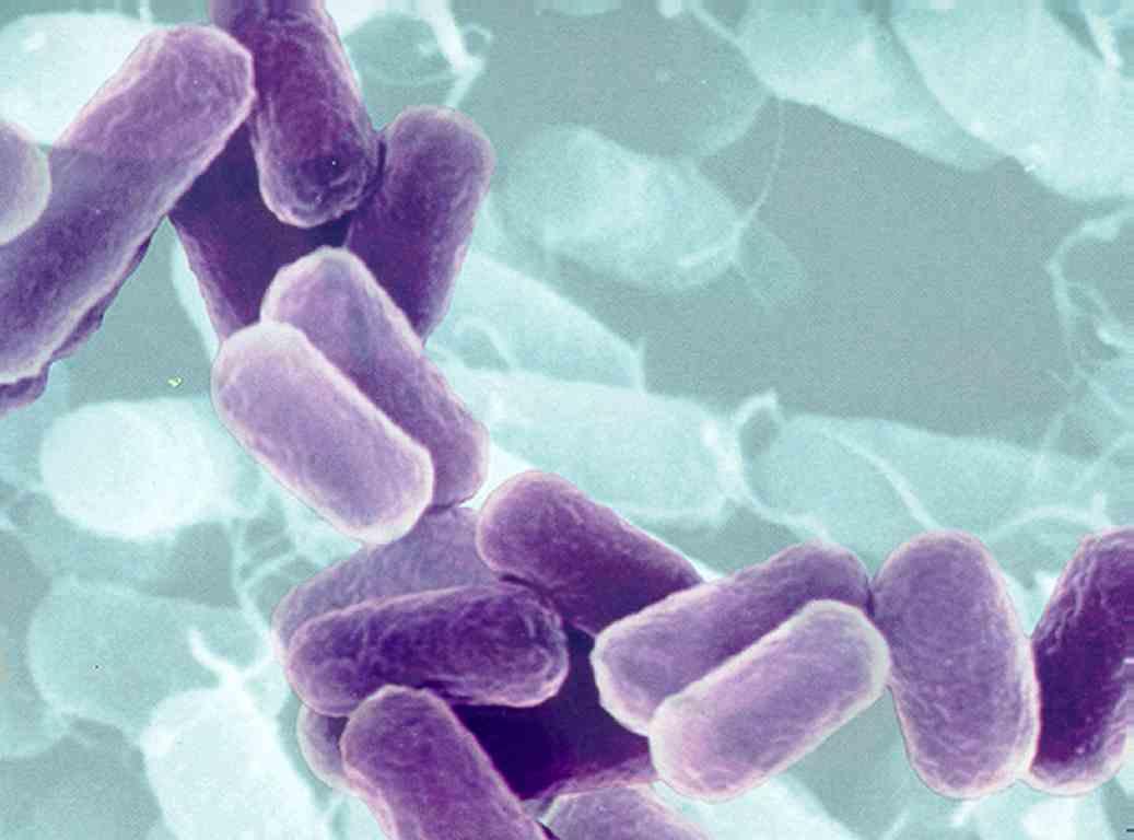 Bactéria kpc um bichinho muito perigoso