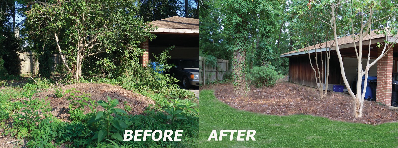dr  dan u0026 39 s garden tips  before and after
