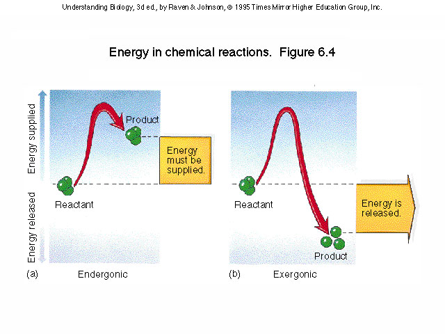 anabolic reaction entropy