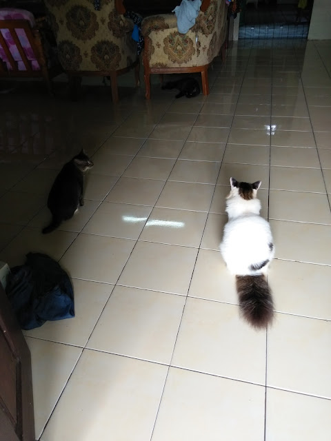 Mop lantai