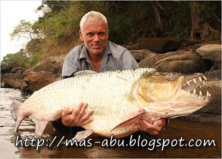 2. Goliath Tigerfish