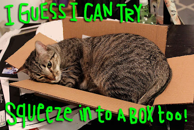 cat-squeeze-box-01