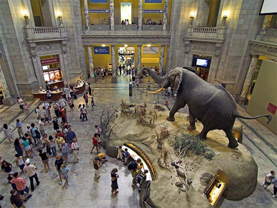 Chicago Museum Natural History Free Days