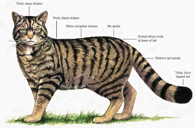 A Kilchoan Diary  Wildcats