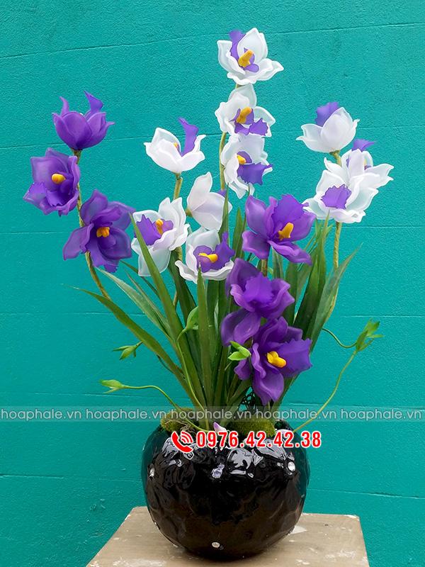 Hoa địa lan tím trắng - hoa pha lê