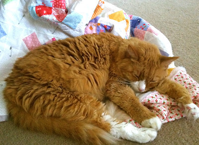 Bailey the cat and quilt