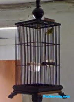 Foto Gambar Kandang Sangkar Burung Pleci Kacamata | Pusburung