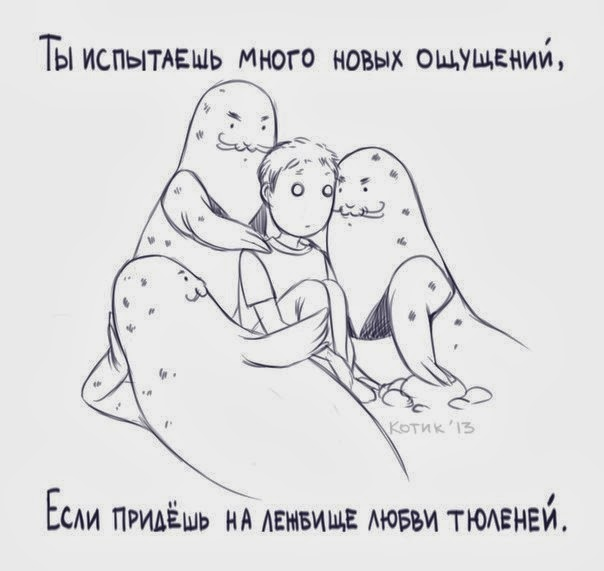 ты испытаешь много новых ощущений если прийдешь на лежбище любви тюленей